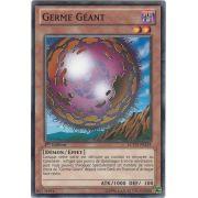 LCYW-FR234 Germe Géant Commune