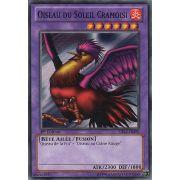 CBLZ-FR090 Oiseau du Soleil Cramoisi Commune