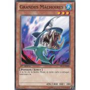 SP13-FR006 Grandes Mâchoires Commune