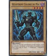 HA07-FR011 Héliotrope Colonie du Mal Super Rare