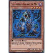 HA07-FR052 Salamandra Colonie du Mal Super Rare