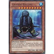LTGY-FR008 Grande Baleine Rare