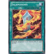 LCJW-FR062 Salamandra Commune