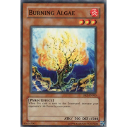 DR2-EN063 Burning Algae Commune