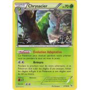 XY2_2/106 Chrysacier Peu commune