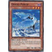 BP01-FR184 Oiseau Furtif Commune