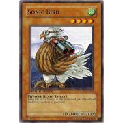GLD1-EN002 Sonic Bird Commune