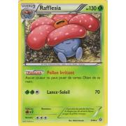 XY7_3/98 Rafflesia Rare