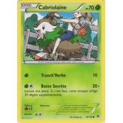 XY8_16/162 Cabriolaine Commune