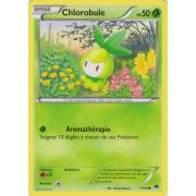 XY9_7/122 Chlorobule Commune