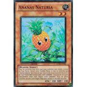 HASE-FR002 Ananas Naturia Super Rare