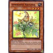 HA04-FR050 Ambroisie Naturia Super Rare