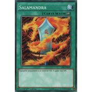 LDK2-FRJ27 Salamandra Commune