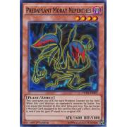 FUEN-EN007 Predaplant Moray Nepenthes Super Rare