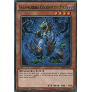 SR04-FR015 Salamandra Colonie du Mal Commune