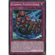 MP17-FR168 Eldonia Paléozoïque Commune