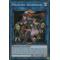 SHVA-FR052 Magicien Akashique Super Rare