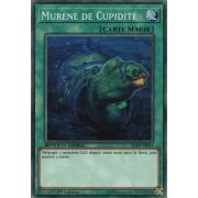SBAD-FR034 Murène de Cupidité Commune
