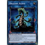 MP19-FR191 Dragon Agave Commune