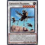 CHIM-FR082 Criquets Pèlerins Commune