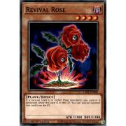 LDS2-EN098 Revival Rose Commune