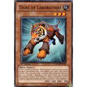 RYMP-FR098 Tigre de Laboratoire Commune