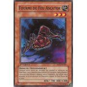 ABPF-FR020 Fourmi De Feu Ascator Commune